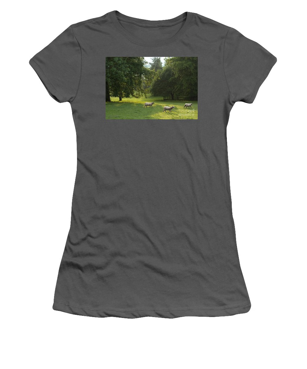 Sheep Women's T-Shirt (Athletic Fit) featuring the photograph Going Back by Angel Ciesniarska