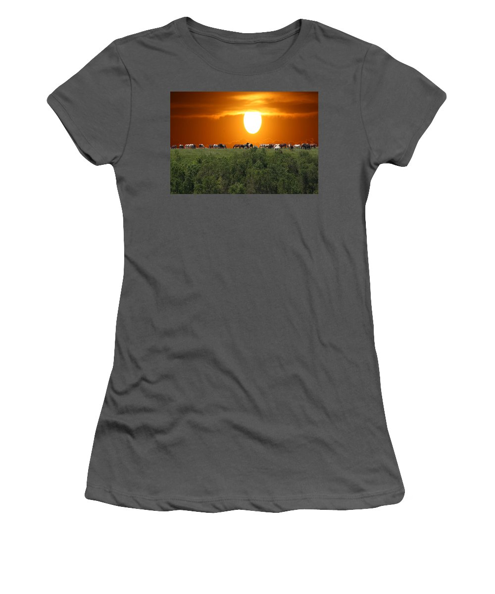 Horses Herd Sunset Grass Trees Nature Animals Scenery Sun Women's T-Shirt (Athletic Fit) featuring the photograph Grazing by Andrea Lawrence