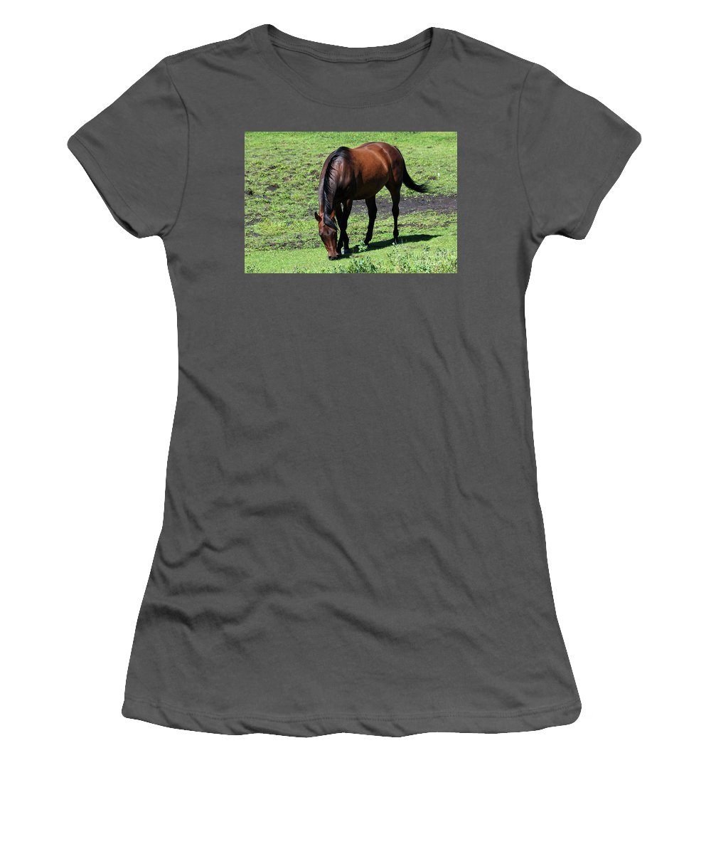 Horse Women's T-Shirt (Athletic Fit) featuring the photograph Grazing Bay by Ann E Robson