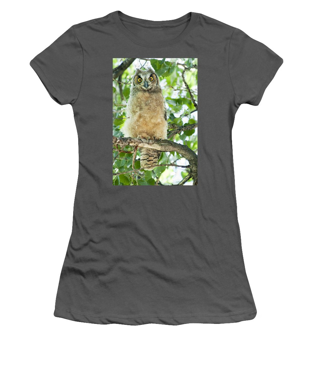 Owl Women's T-Shirt (Athletic Fit) featuring the photograph Great Horned Owl by Gary Beeler