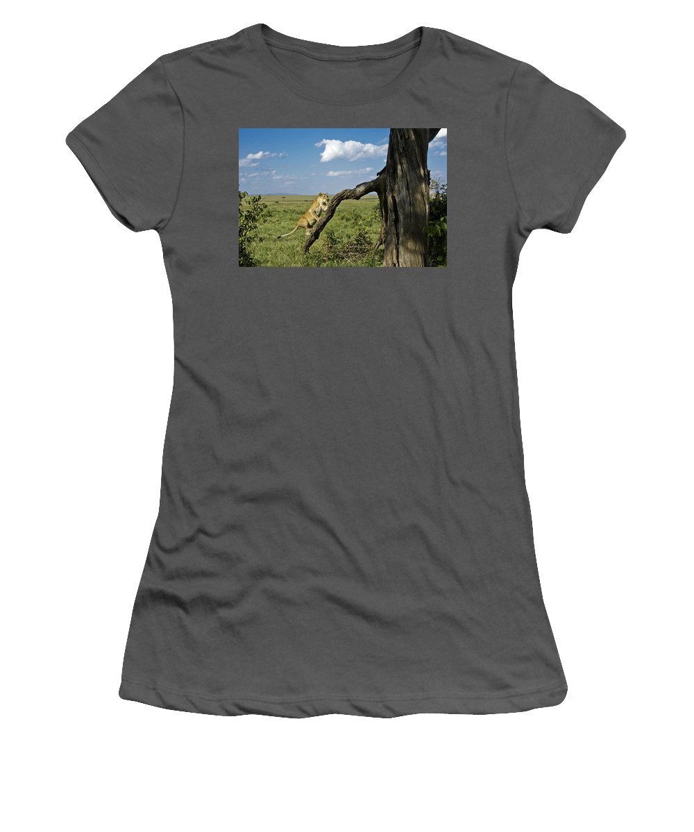 Africa Women's T-Shirt (Athletic Fit) featuring the photograph Heading For A High Spot by Michele Burgess