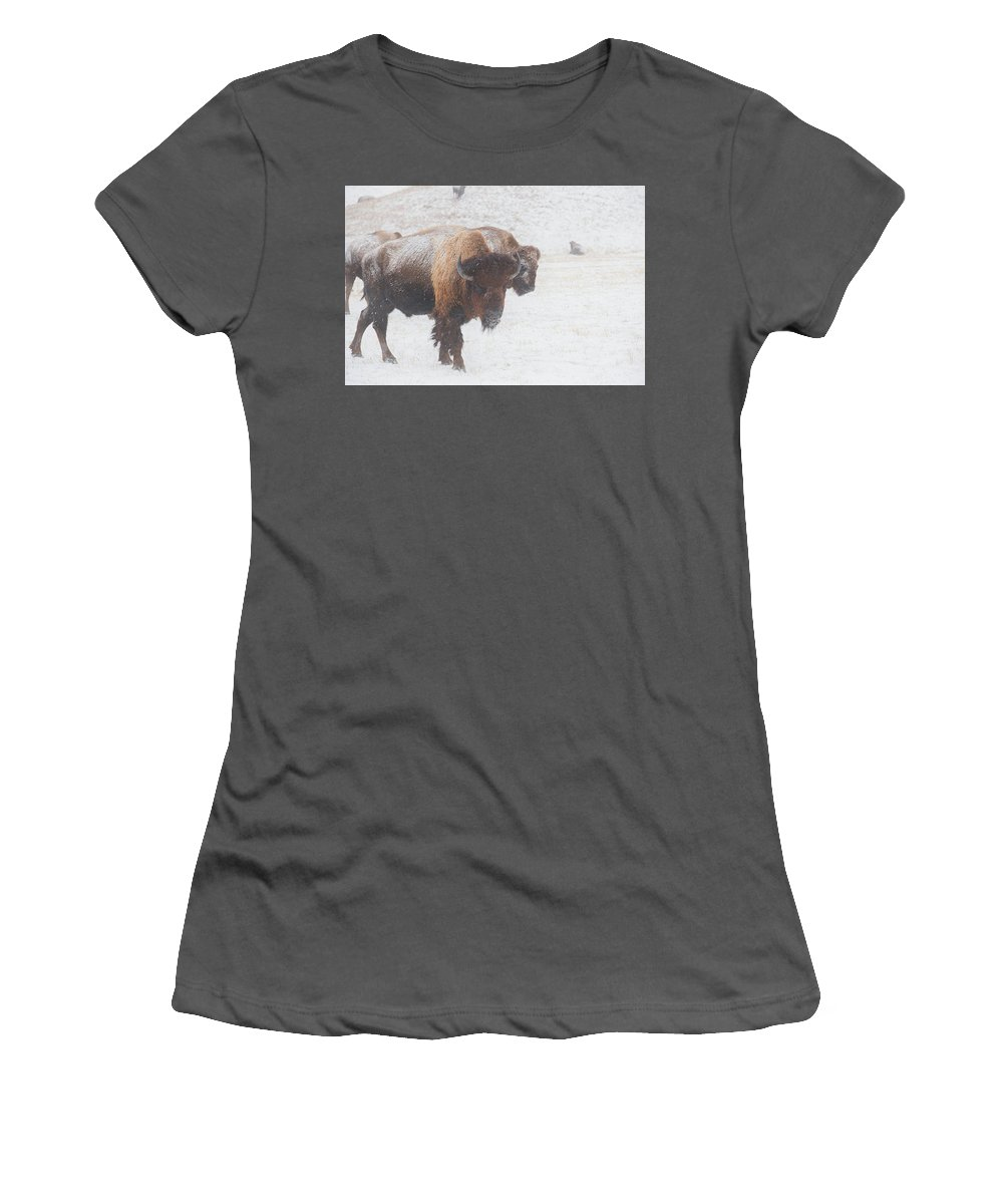 Buffalo Women's T-Shirt (Athletic Fit) featuring the photograph Keep Moving by Derald Gross