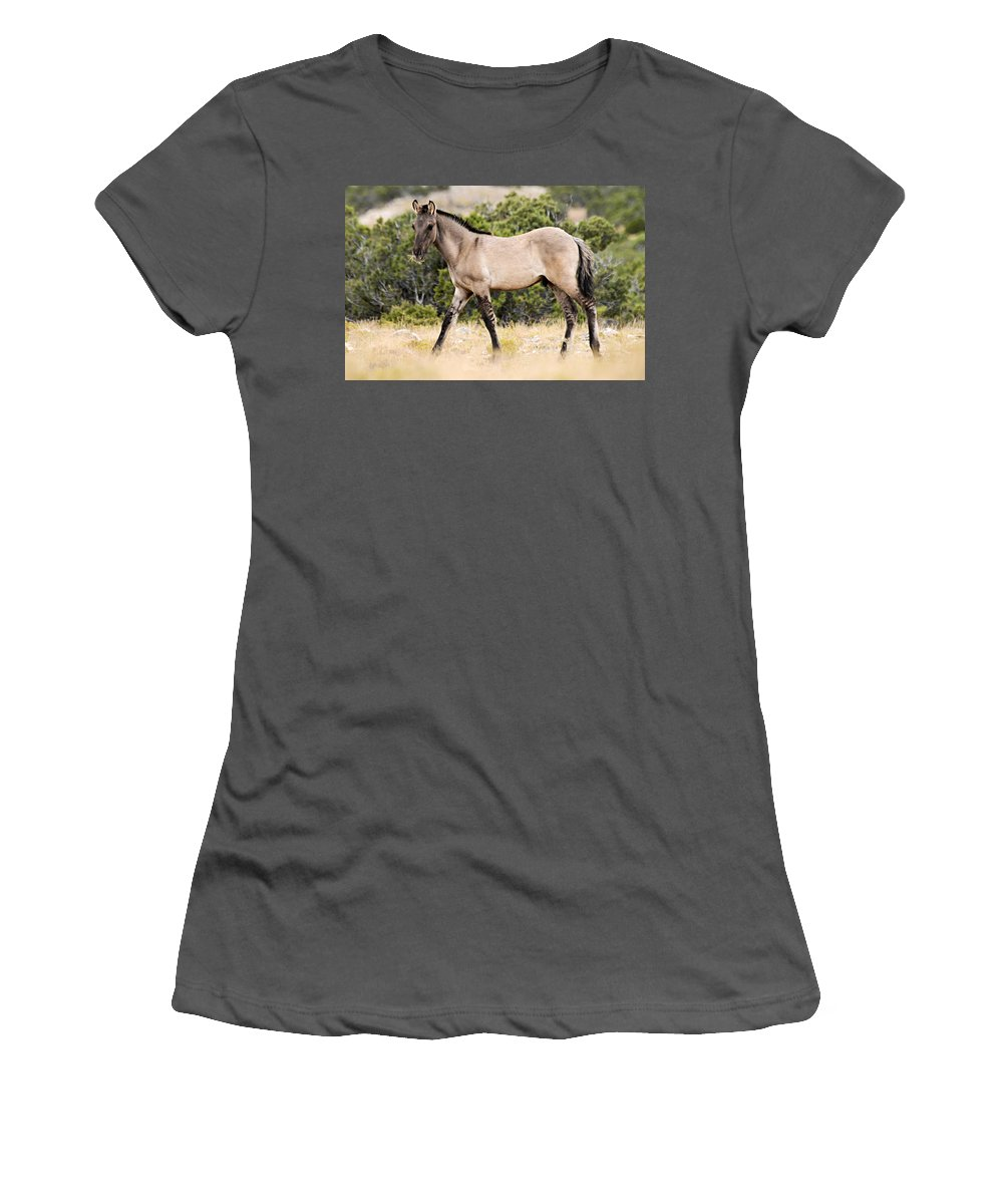 Pryor Mountain Wild Horse Range Women's T-Shirt (Athletic Fit) featuring the photograph Kiger Colt by Larry Ricker