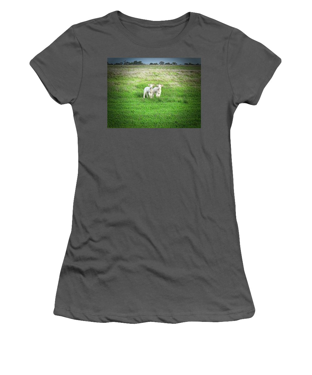 Lambs Women's T-Shirt (Athletic Fit) featuring the photograph Kinda Sheepish by Douglas Barnard