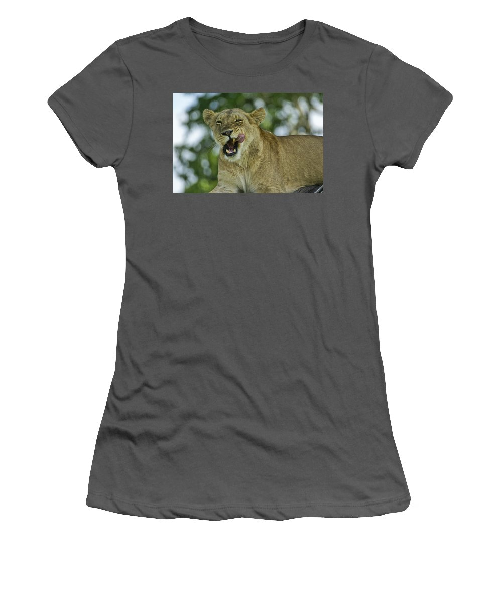 Africa Women's T-Shirt (Athletic Fit) featuring the photograph Licking Lion by Michele Burgess