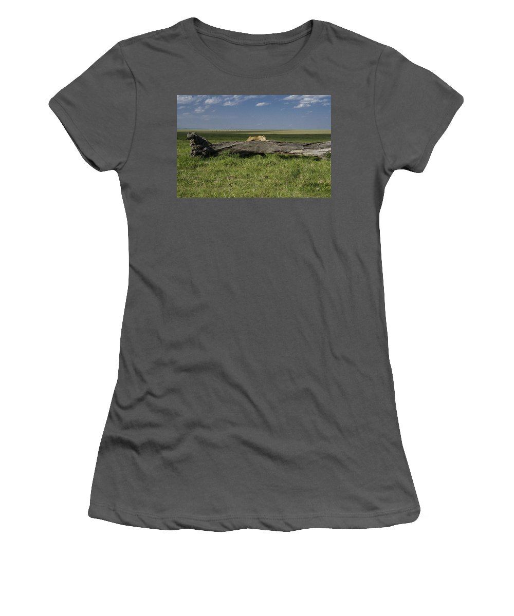 Africa Women's T-Shirt (Athletic Fit) featuring the photograph Lion On A Log by Michele Burgess