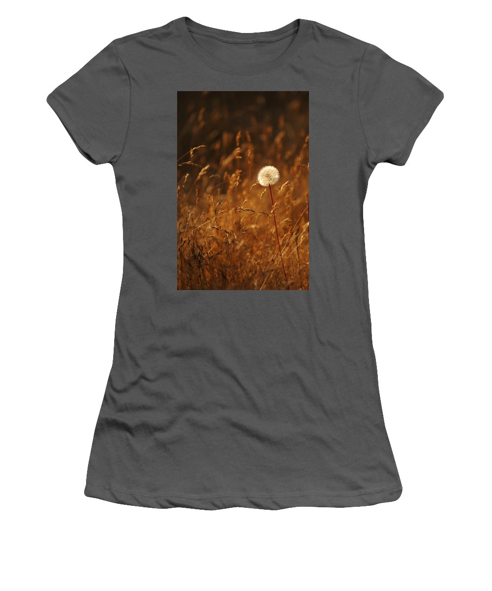 Nature Outdoors Field Dandelion Alone Single Sole Botanical Women's T-Shirt (Athletic Fit) featuring the photograph Lone Dandelion by Jill Reger