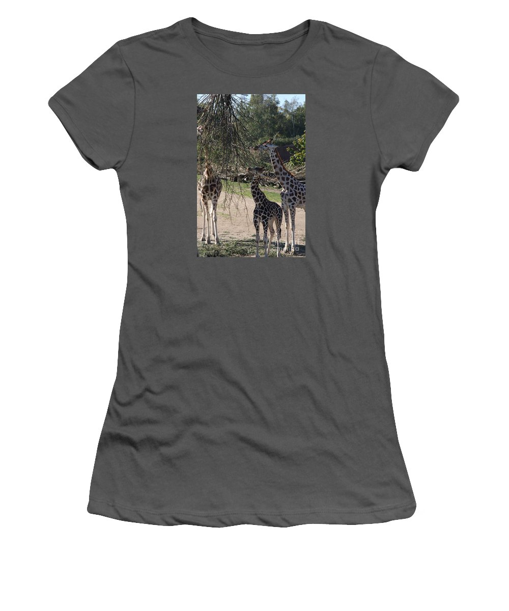 Giraffe Women's T-Shirt (Athletic Fit) featuring the photograph Long Necks by Christiane Schulze Art And Photography
