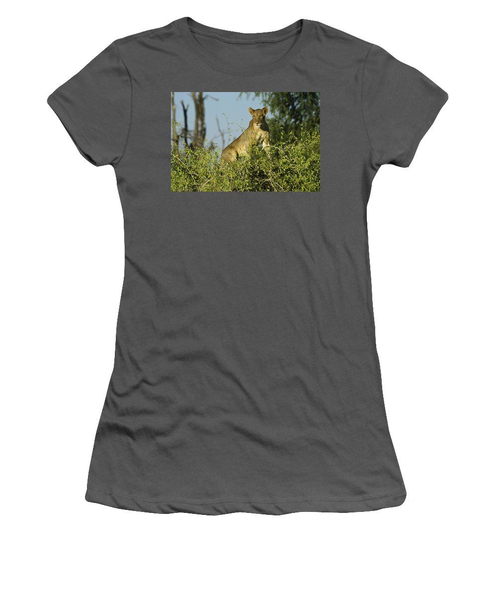Africa Women's T-Shirt (Athletic Fit) featuring the photograph Look How High I Can Climb by Michele Burgess