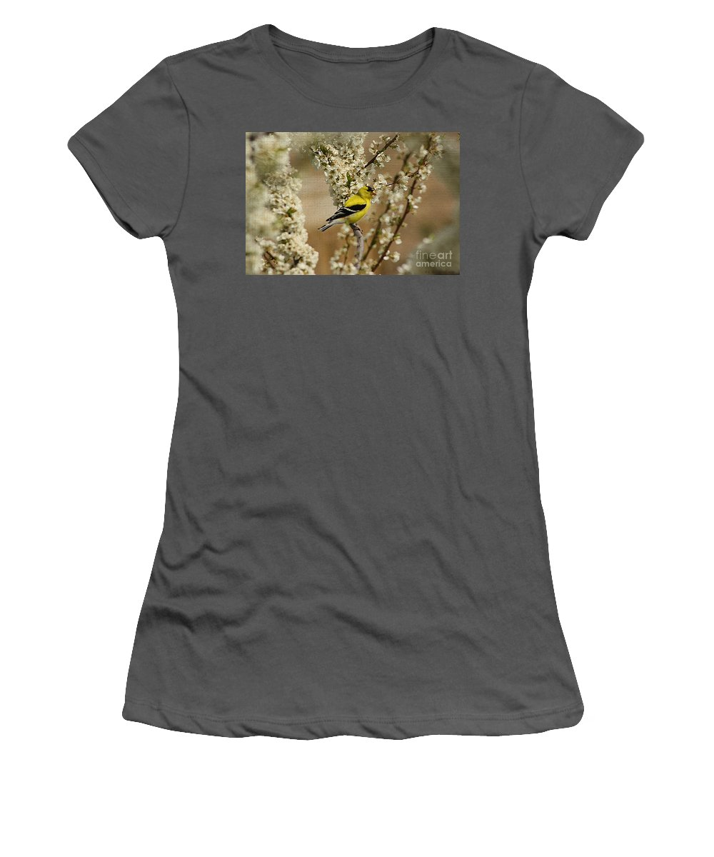 Finch Women's T-Shirt (Athletic Fit) featuring the photograph Male Finch In Blossoms by Cathy Beharriell