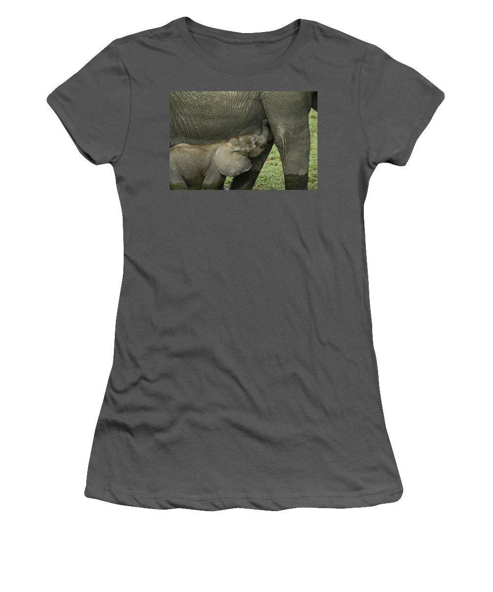 Africa Women's T-Shirt (Athletic Fit) featuring the photograph Mama's Milk Bar by Michele Burgess