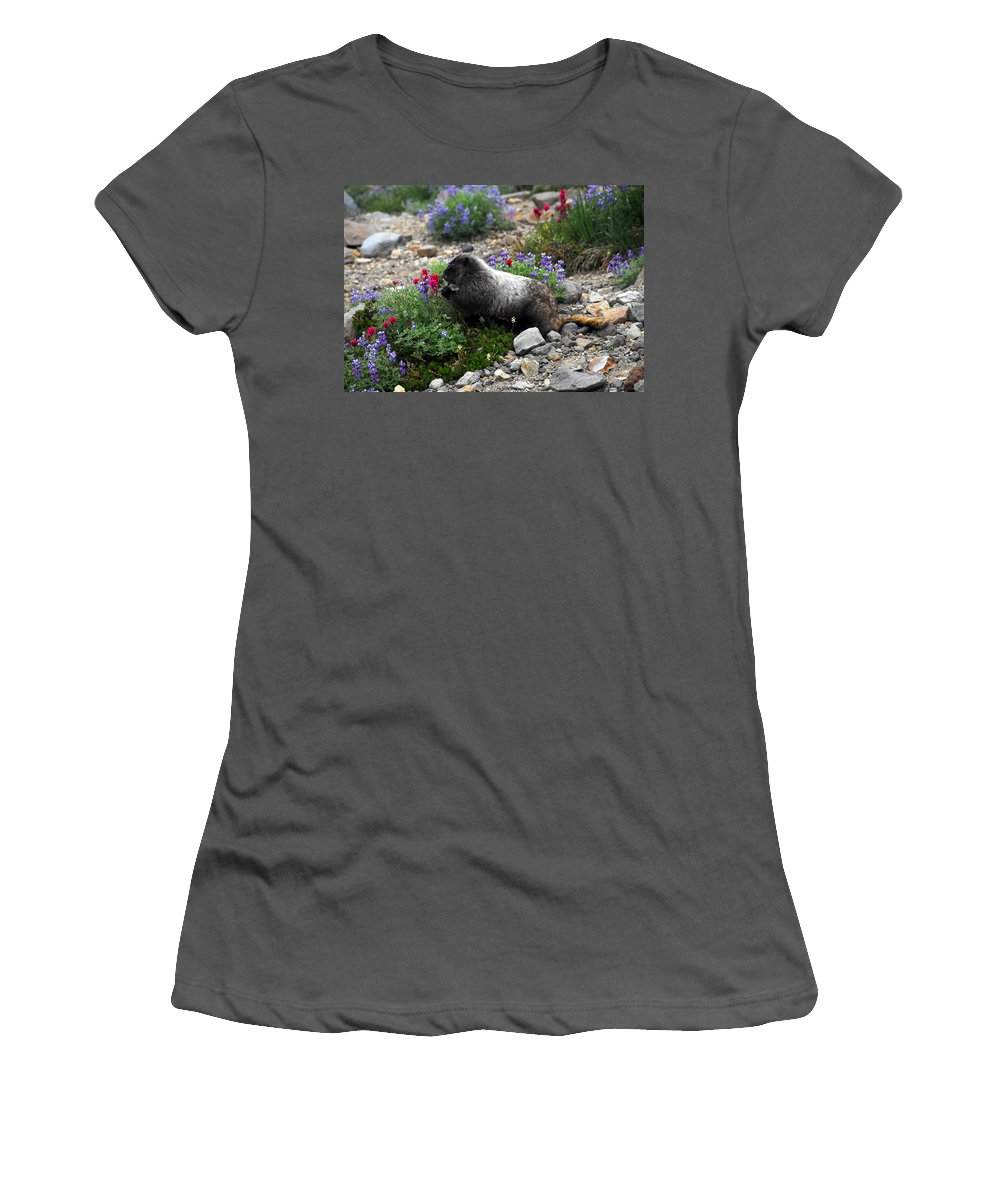 Marmot Women's T-Shirt (Athletic Fit) featuring the photograph Marmot Feeding by David Lee Thompson