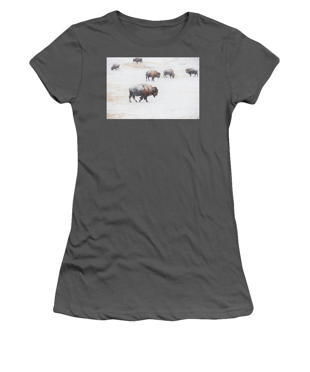Buffalo Women's T-Shirt (Athletic Fit) featuring the photograph Matriarch by Derald Gross