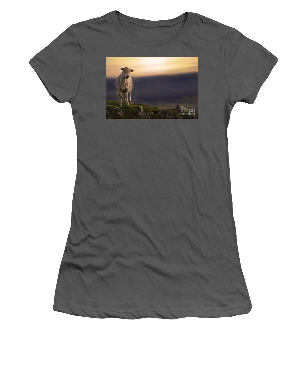 Sheep Women's T-Shirt (Athletic Fit) featuring the photograph On The Top Of The Hill by Angel Tarantella