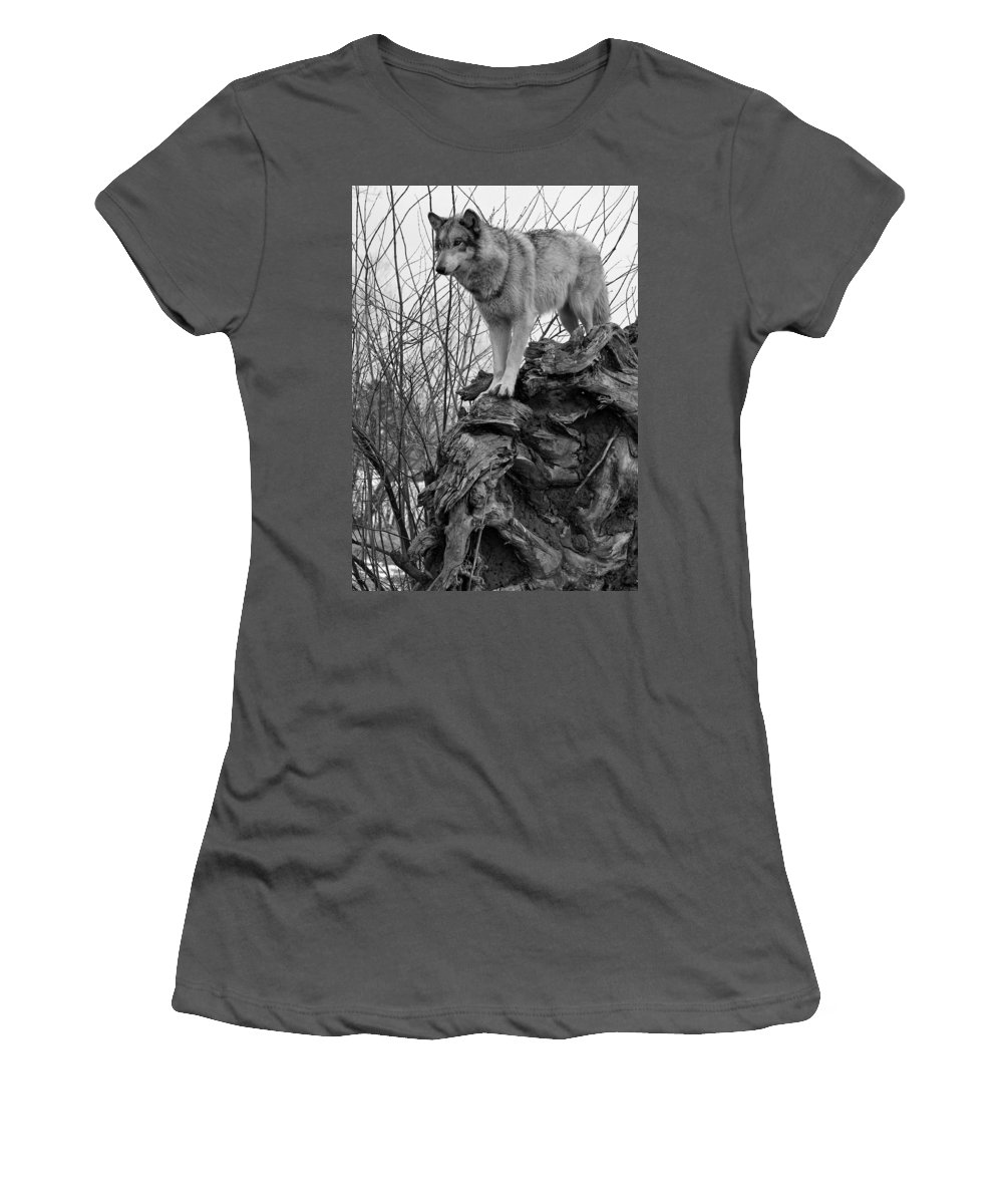 Black White Wolf Wolves Animal Wildlife Mammal Photography Photograph Canis Lupis Grey Timberwolf Women's T-Shirt (Athletic Fit) featuring the photograph On Top by Shari Jardina