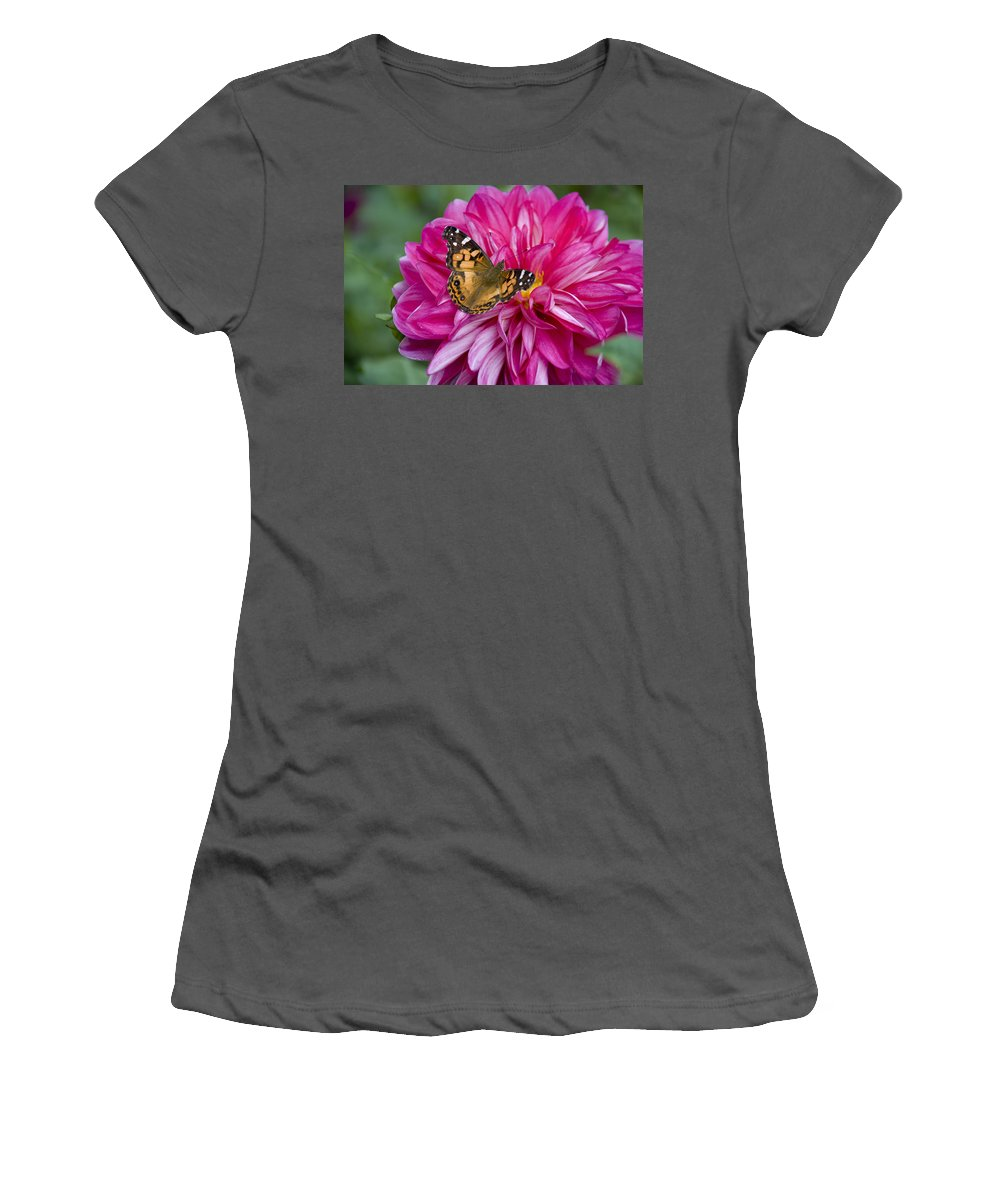 Painted Lady Women's T-Shirt (Athletic Fit) featuring the photograph Painted Lady On Dahlia by Charles Harden