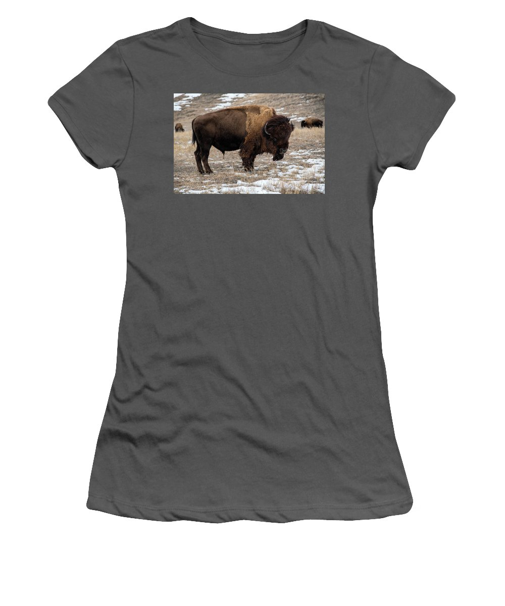 Buffalo Women's T-Shirt (Athletic Fit) featuring the photograph Prairie Giant by Derald Gross