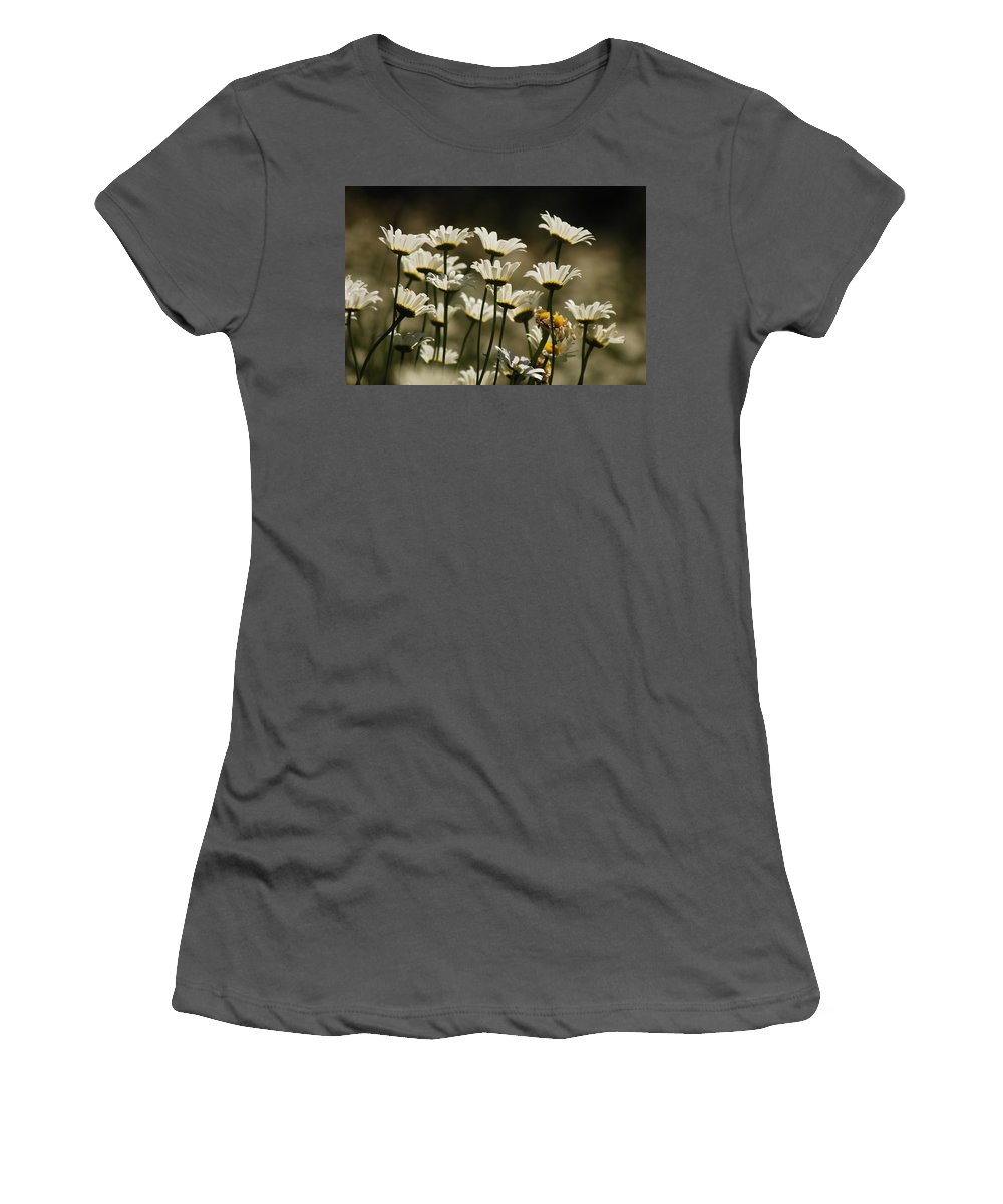 Daisy Women's T-Shirt (Athletic Fit) featuring the photograph Pushing Up Daisies by Donna Blackhall