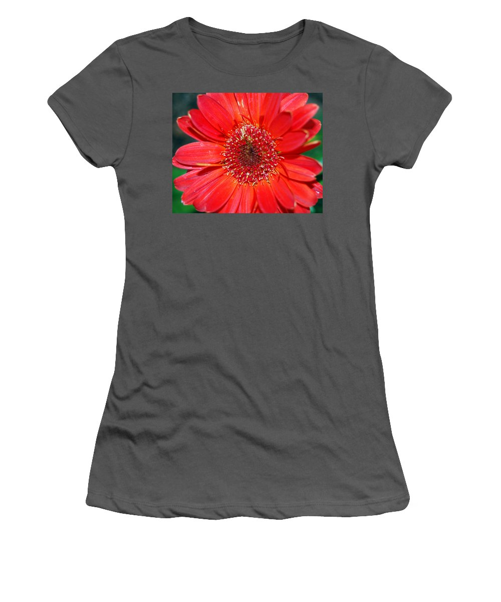 Gerber Women's T-Shirt (Athletic Fit) featuring the photograph Red Gerber Daisy by Amy Fose