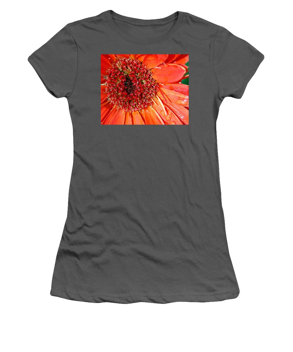 Gerber Daisy Women's T-Shirt (Athletic Fit) featuring the photograph Red Gerbera Daisy by Amy Fose