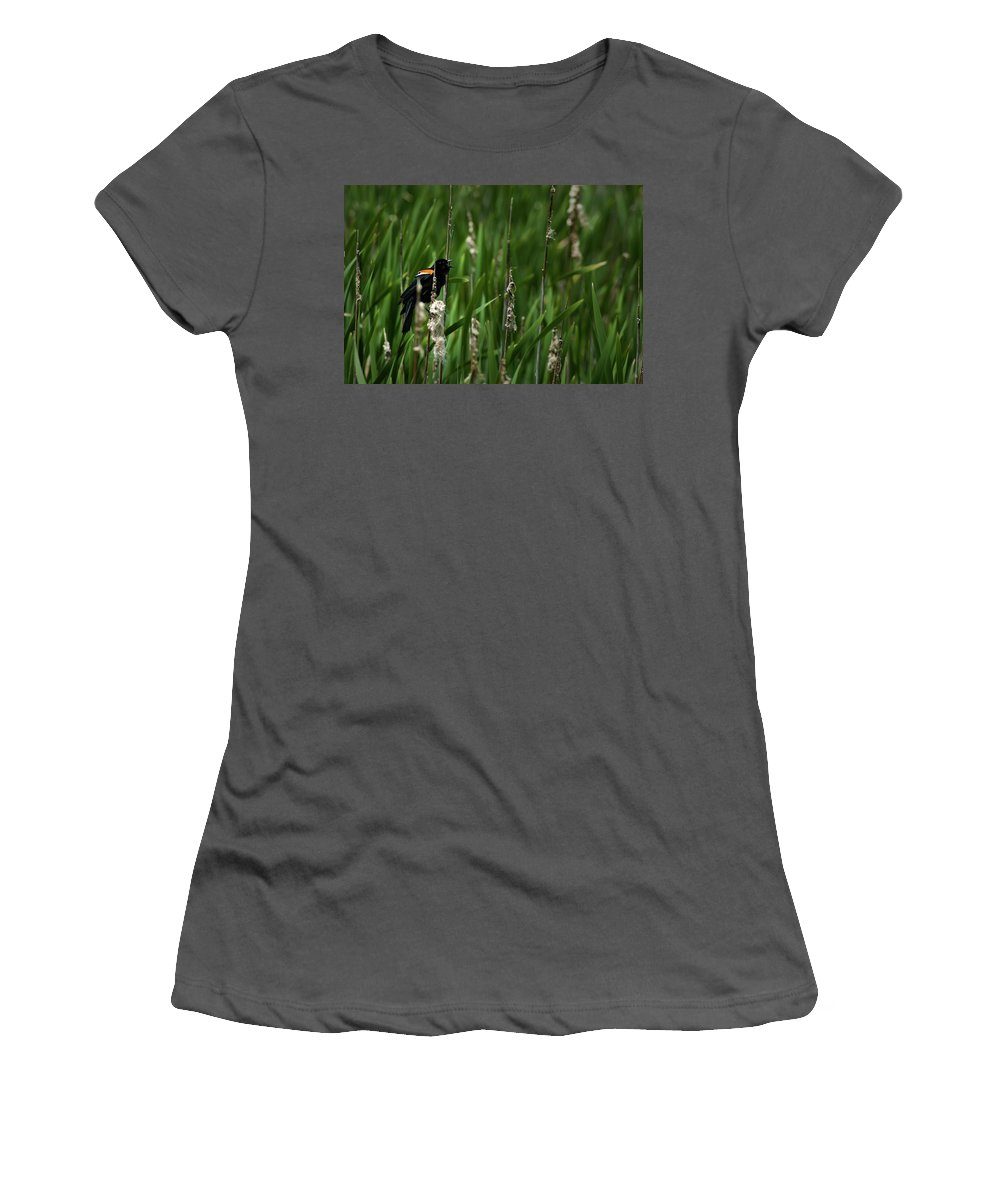 Red-winged Black Bird Women's T-Shirt (Athletic Fit) featuring the photograph Red-winged Blackbird Calling by Onyonet Photo Studios