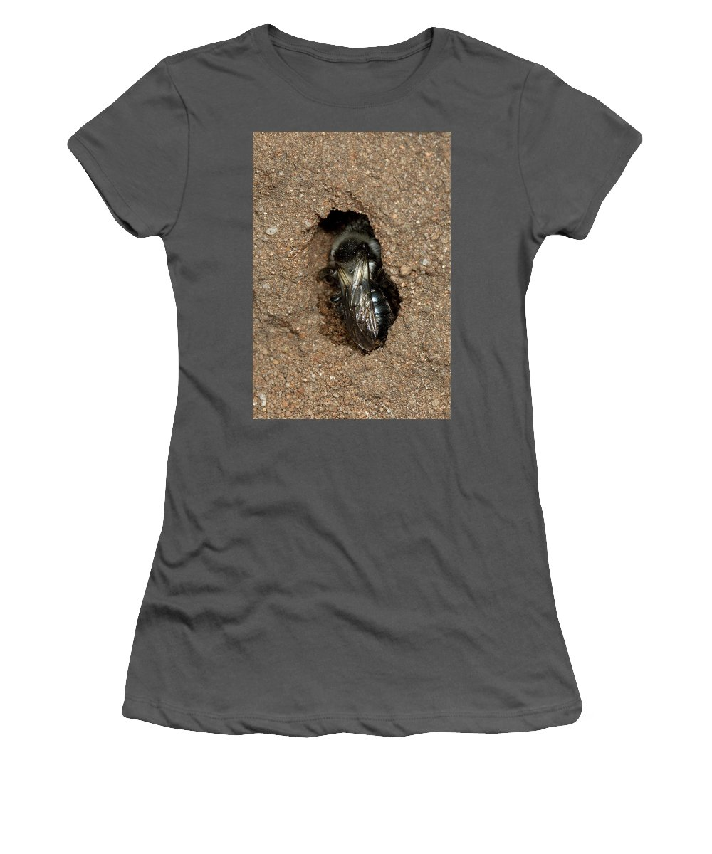 Solitary Bee Women's T-Shirt (Athletic Fit) featuring the photograph Solitary Bee Andrena Cinearia by Bob Kemp