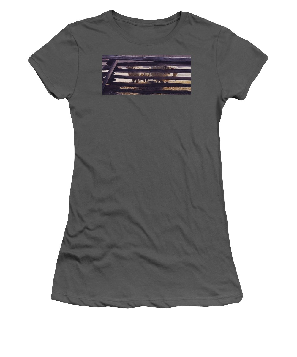 Sheep Women's T-Shirt (Athletic Fit) featuring the painting Spring Thaw by Denny Bond