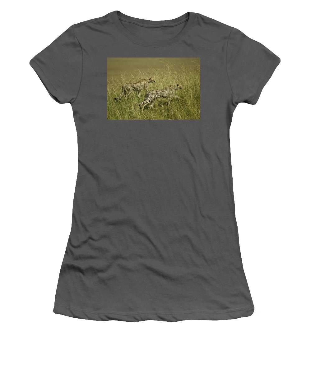 Africa Women's T-Shirt (Athletic Fit) featuring the photograph Stalking Cheetahs by Michele Burgess
