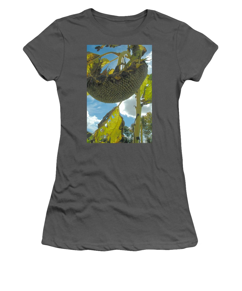 Sunflower Women's T-Shirt (Athletic Fit) featuring the photograph Sunflower Seeds by Trish Hale