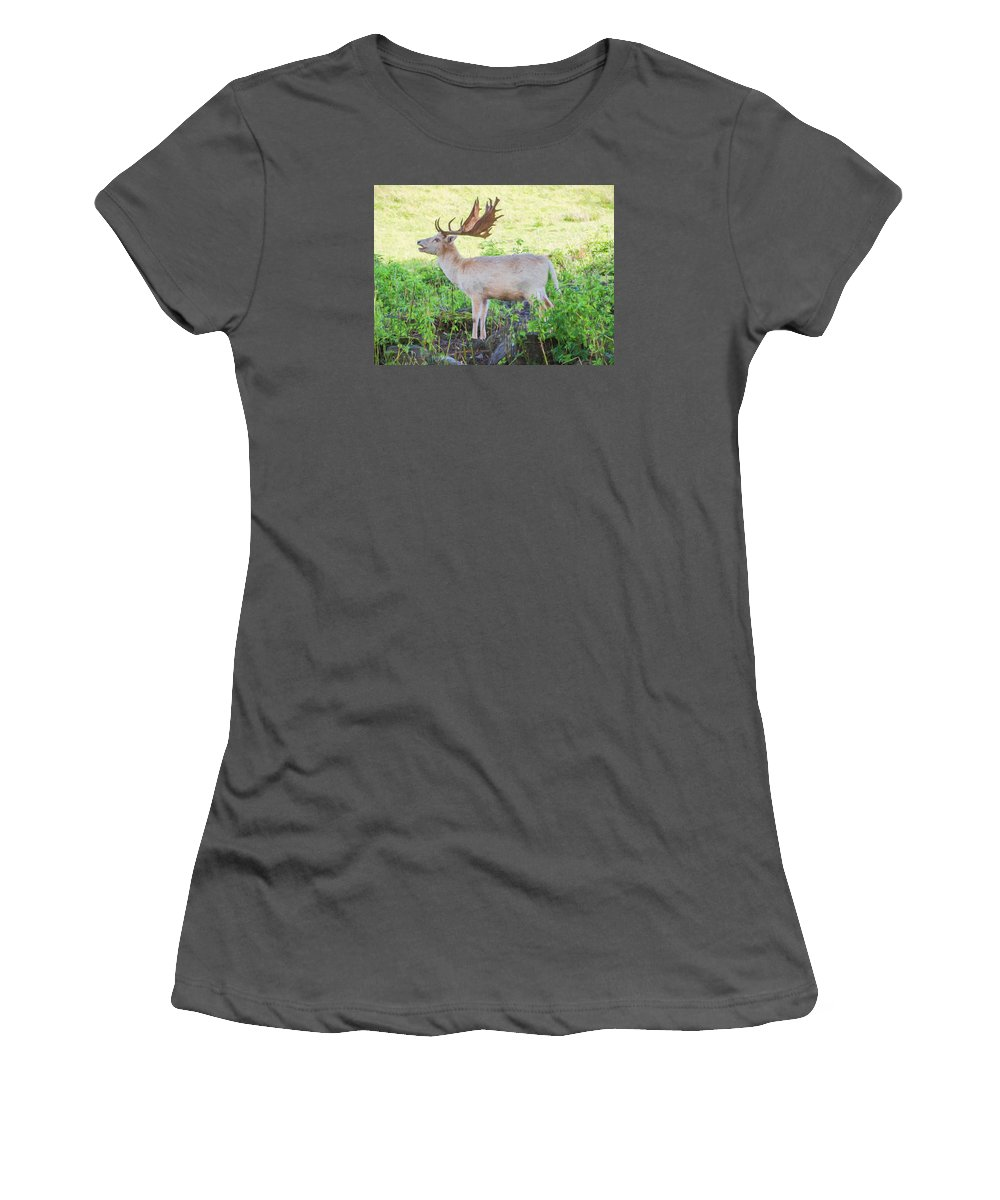Cervidae Women's T-Shirt (Athletic Fit) featuring the digital art The White Stag 2 by Roy Pedersen