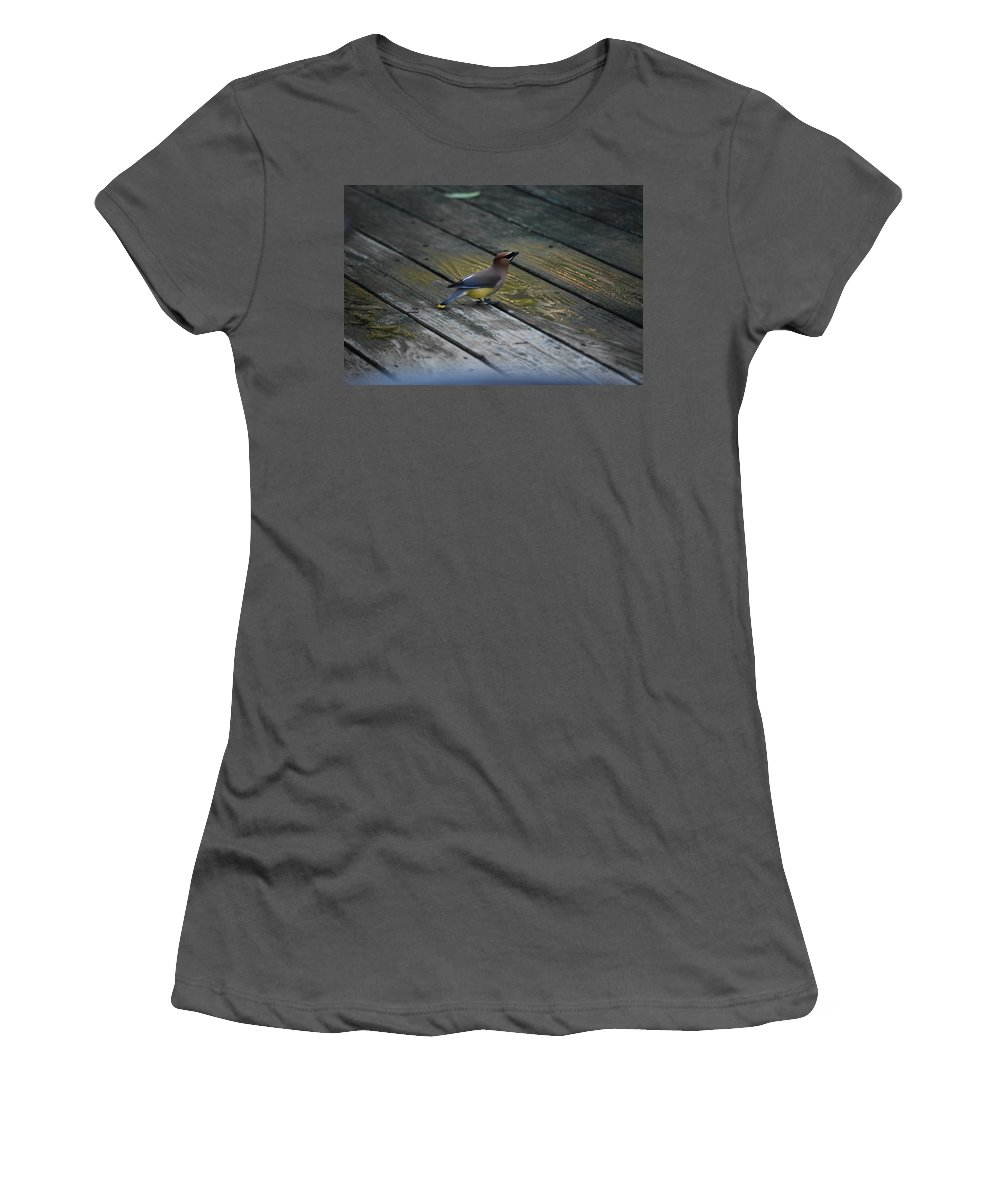Cedar Waxwing Women's T-Shirt (Athletic Fit) featuring the photograph They Call Me Cedar by Lori Tambakis