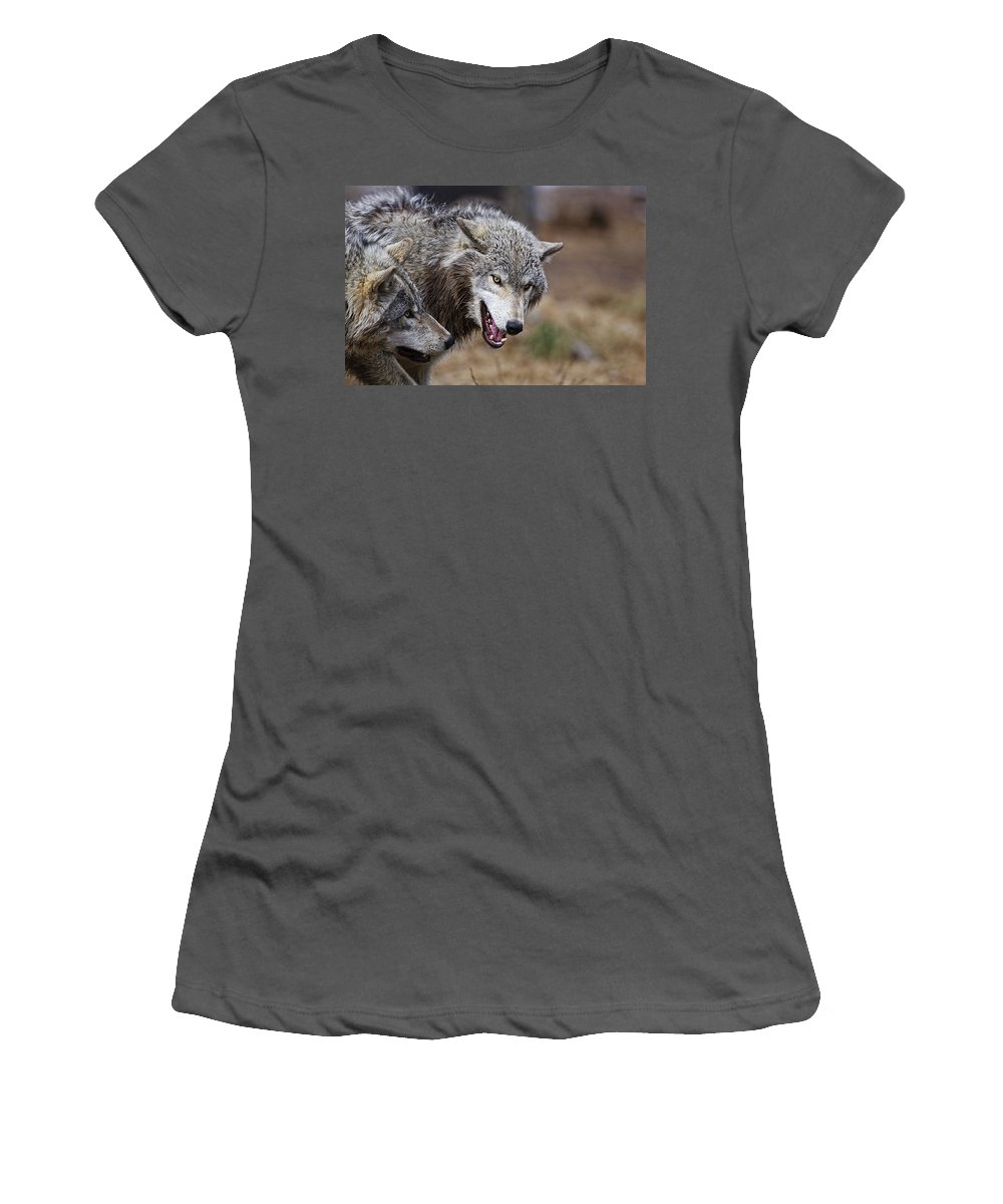 Wolf Women's T-Shirt (Athletic Fit) featuring the photograph Timber Wolves by Michael Cummings