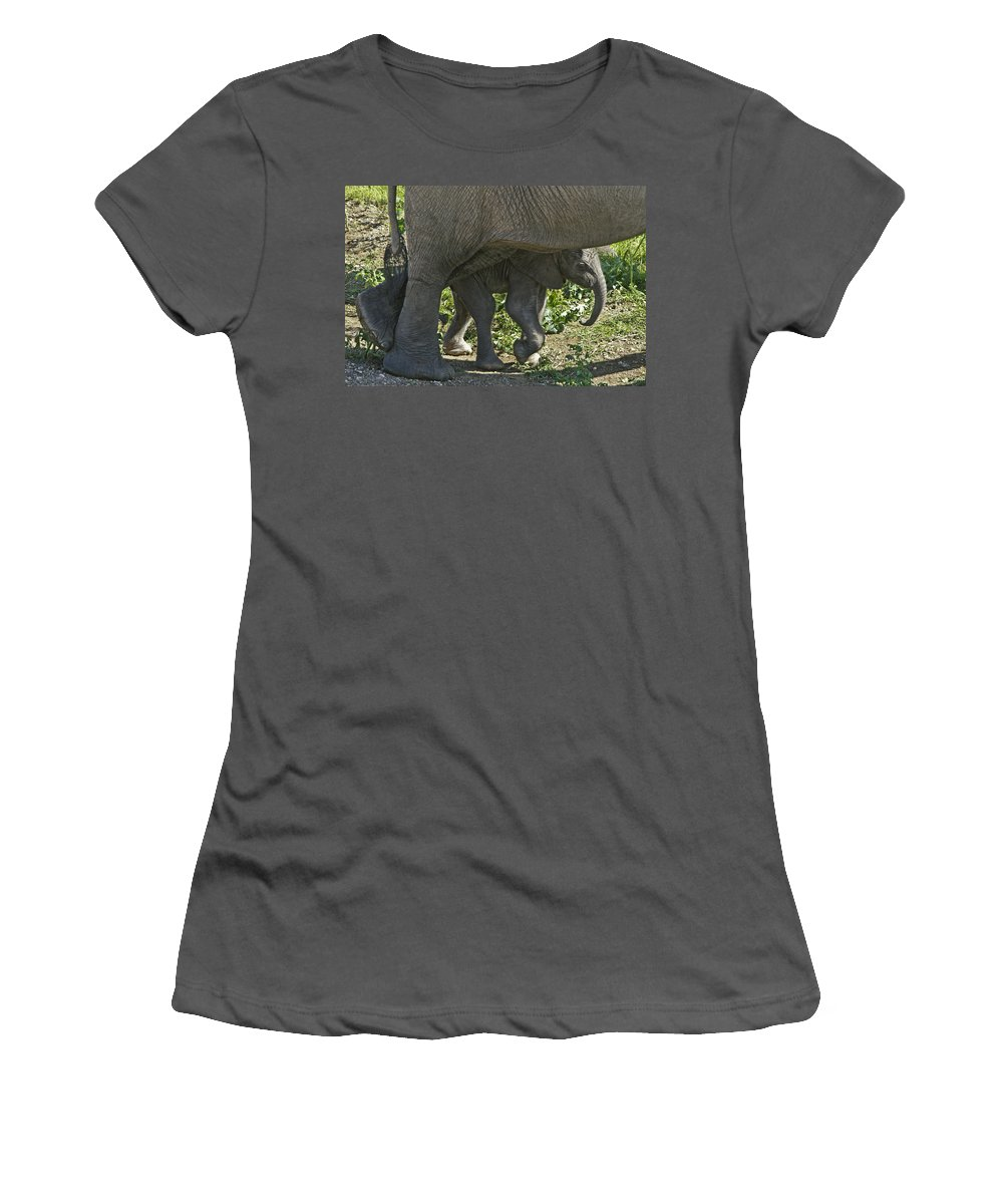 Africa Women's T-Shirt (Athletic Fit) featuring the photograph Tiny Newborn by Michele Burgess