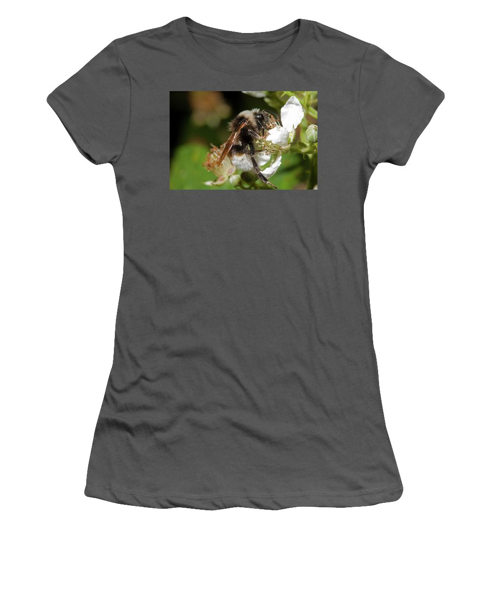 Hymenoptera Women's T-Shirt (Athletic Fit) featuring the photograph White Bumblebee by Bob Kemp