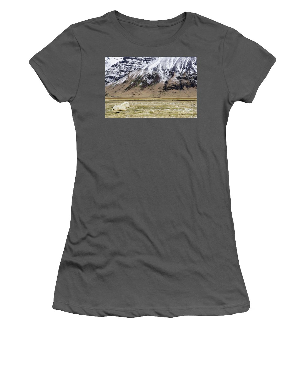 Iceland Women's T-Shirt (Athletic Fit) featuring the photograph White Icelandic Horse by Brian Kamprath
