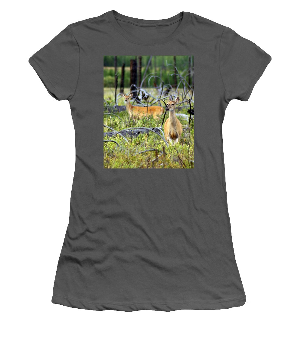 Deer Women's T-Shirt (Athletic Fit) featuring the photograph Whitetails by Marty Koch