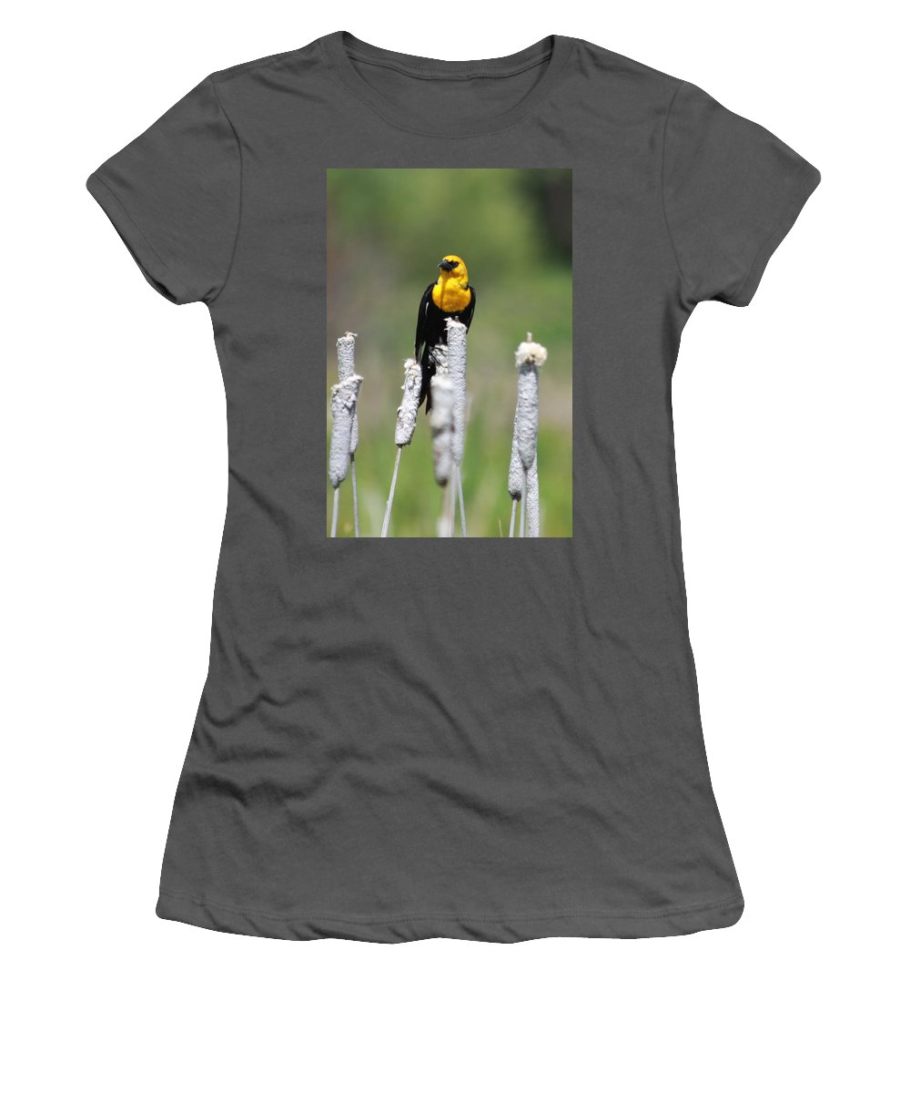 Wild Women's T-Shirt (Athletic Fit) featuring the photograph Yellow-headed Blackbird by Karon Melillo DeVega