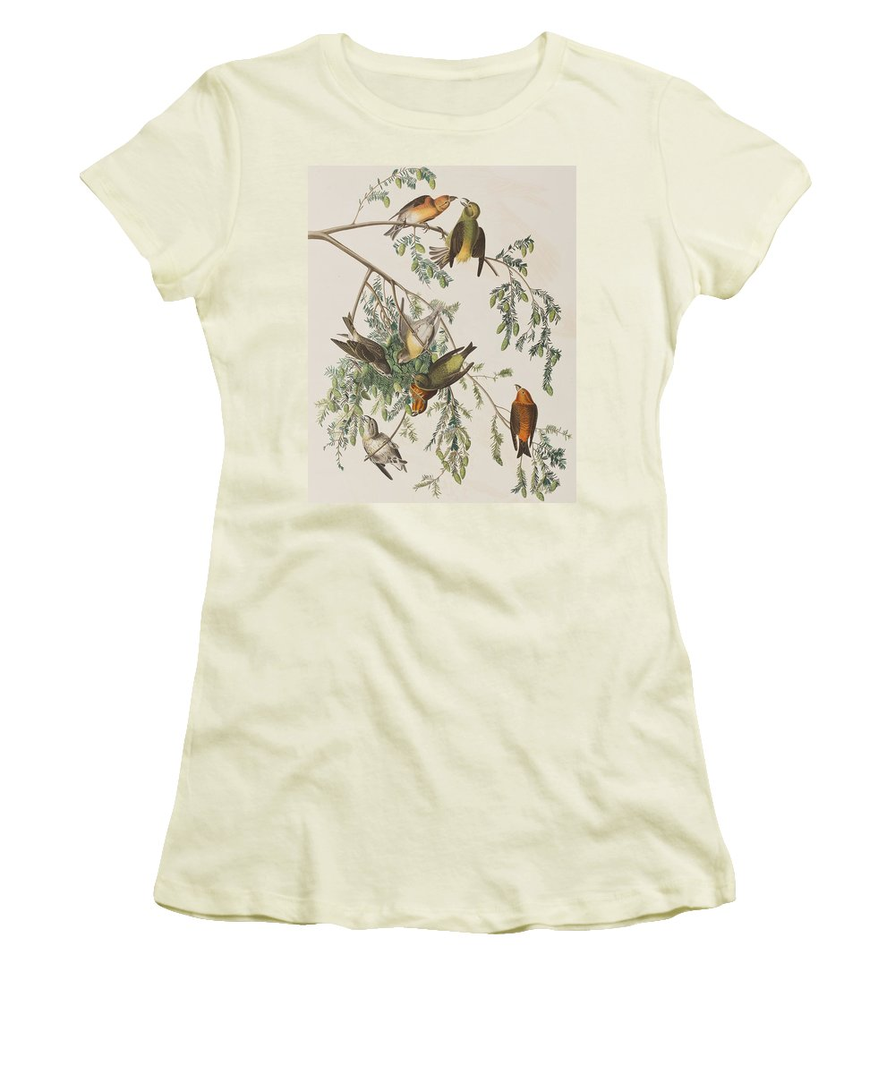 Crossbill Women's T-Shirts