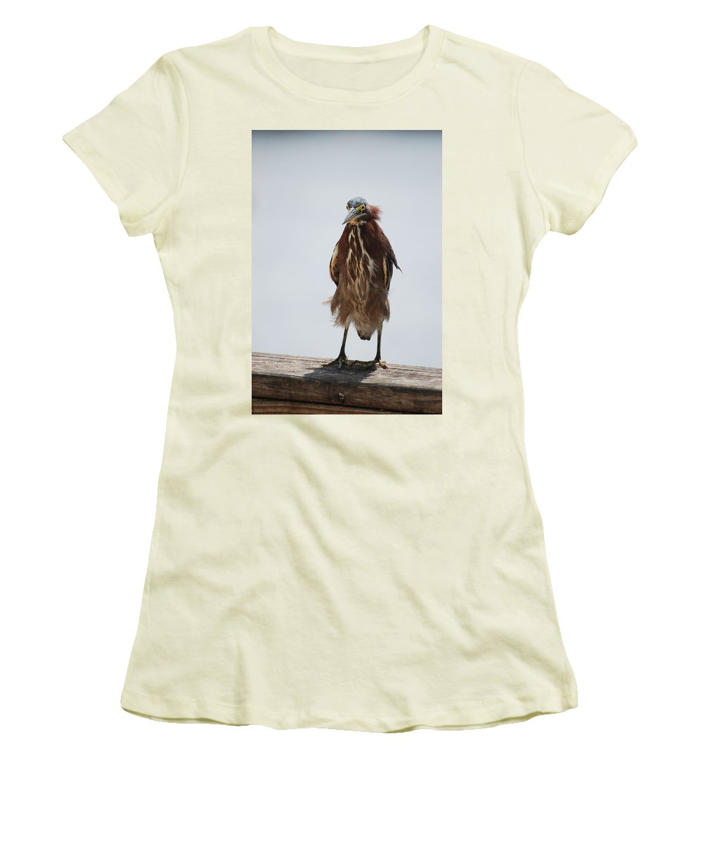 Birds Women's T-Shirt (Athletic Fit) featuring the photograph Angry Bird by Rob Hans