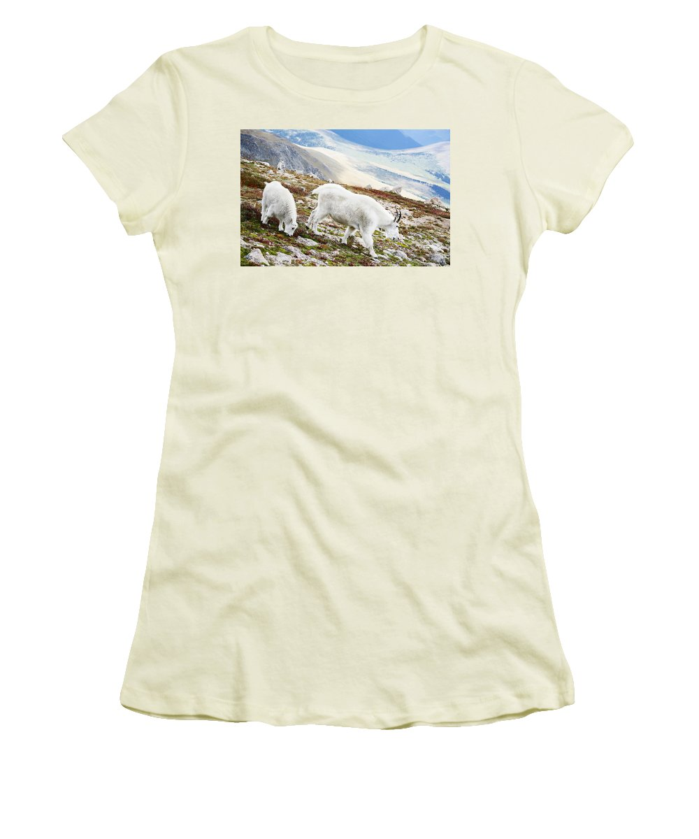 Mountain Women's T-Shirt (Athletic Fit) featuring the photograph Mountain Goats 1 by Marilyn Hunt