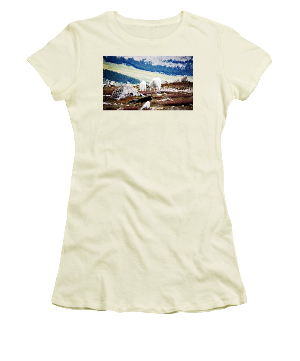 Animal Women's T-Shirt (Athletic Fit) featuring the photograph Mountain Goats 2 by Marilyn Hunt
