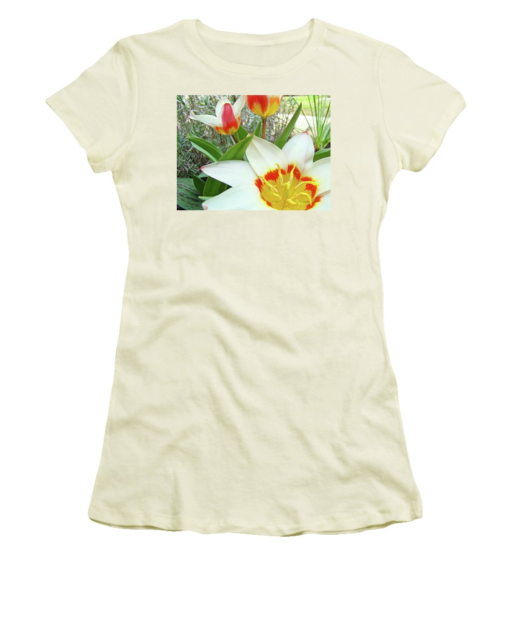 Tulip Women's T-Shirt (Athletic Fit) featuring the photograph Office Art Tulips Tulip Flowers Giclee Art Prints Florals Baslee Troutman by Baslee Troutman