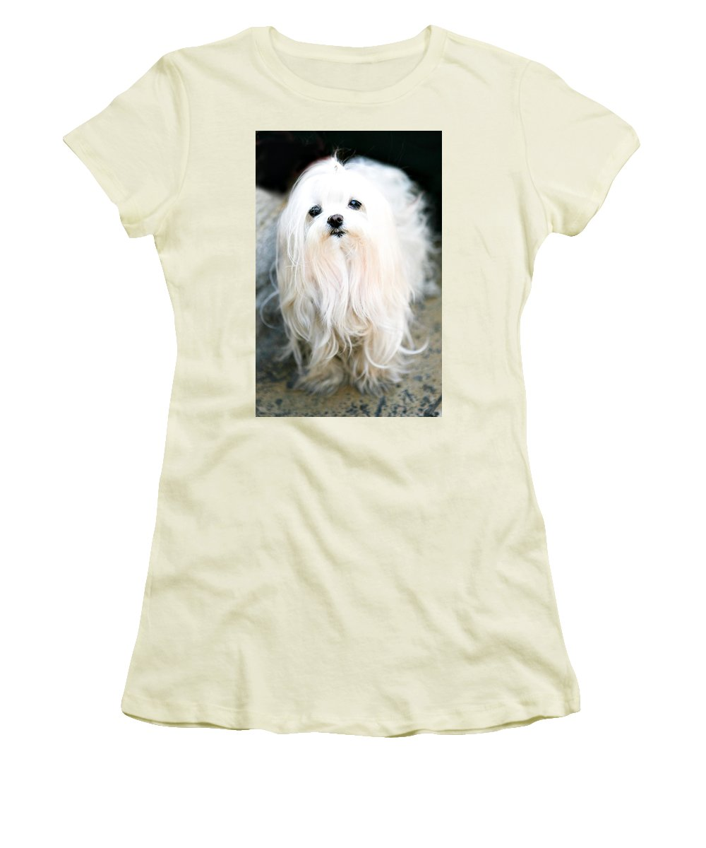 Small Women's T-Shirt (Athletic Fit) featuring the photograph White Fluff by Marilyn Hunt