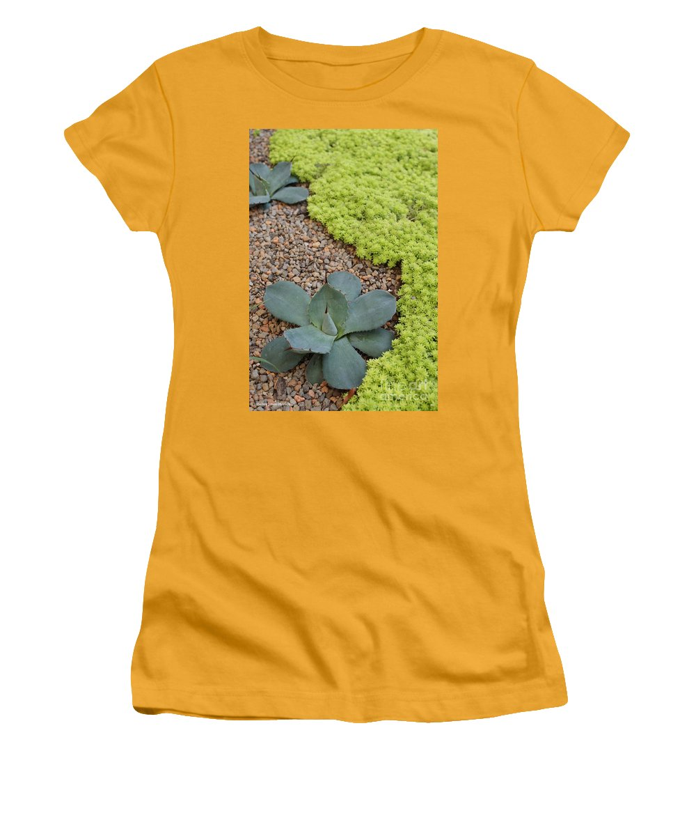 Cacti Women's T-Shirt (Athletic Fit) featuring the photograph Texture by Shelley Jones