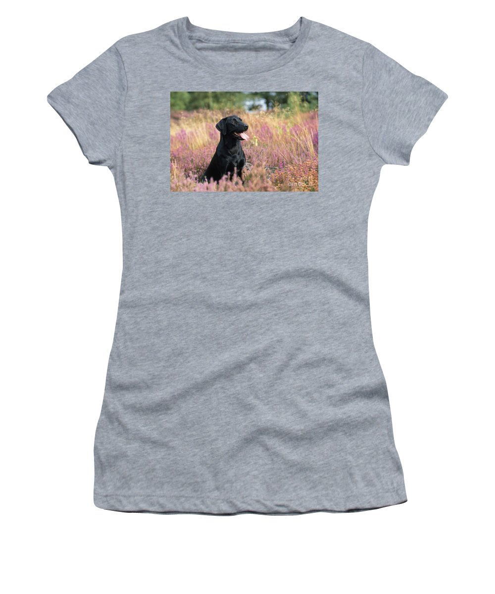Black Labrador Women's T-Shirt (Athletic Fit) featuring the photograph Black Labrador Dog by John Daniels