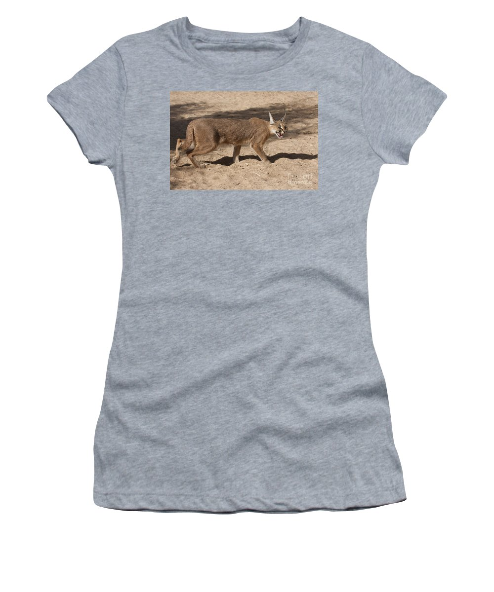 Caracal Women's T-Shirt featuring the photograph Caracal by Eyal Bartov