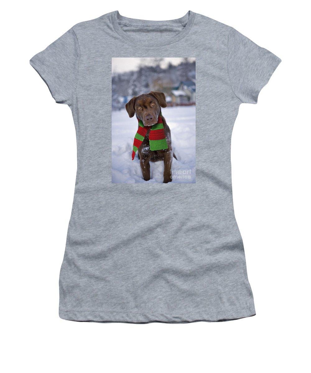 Labrador Retriever Women's T-Shirt (Athletic Fit) featuring the photograph Chocolate Labrador Retriever by Rolf Kopfle