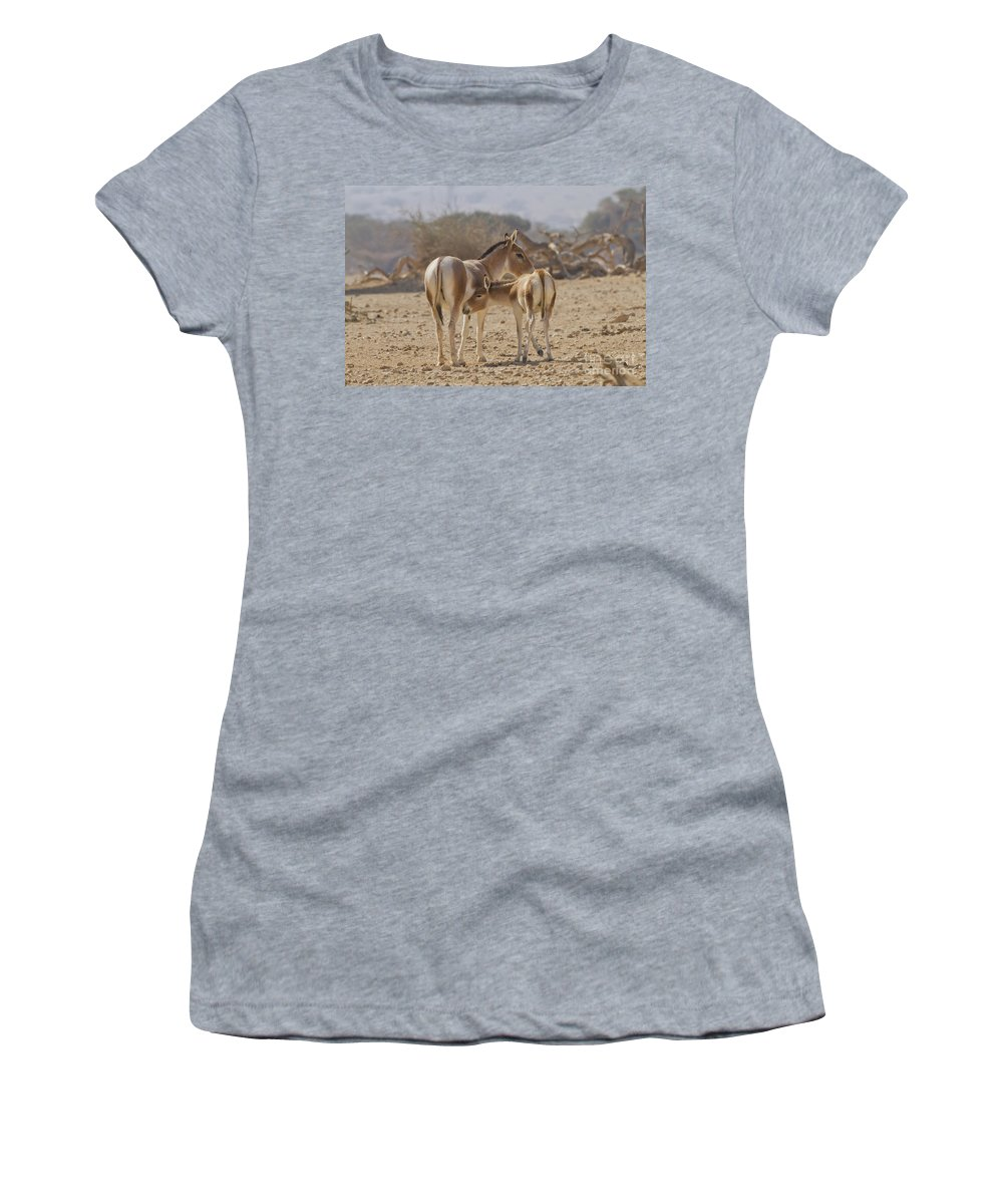 Equus Hemionus Women's T-Shirt featuring the photograph Onager Equus Hemionus by Eyal Bartov