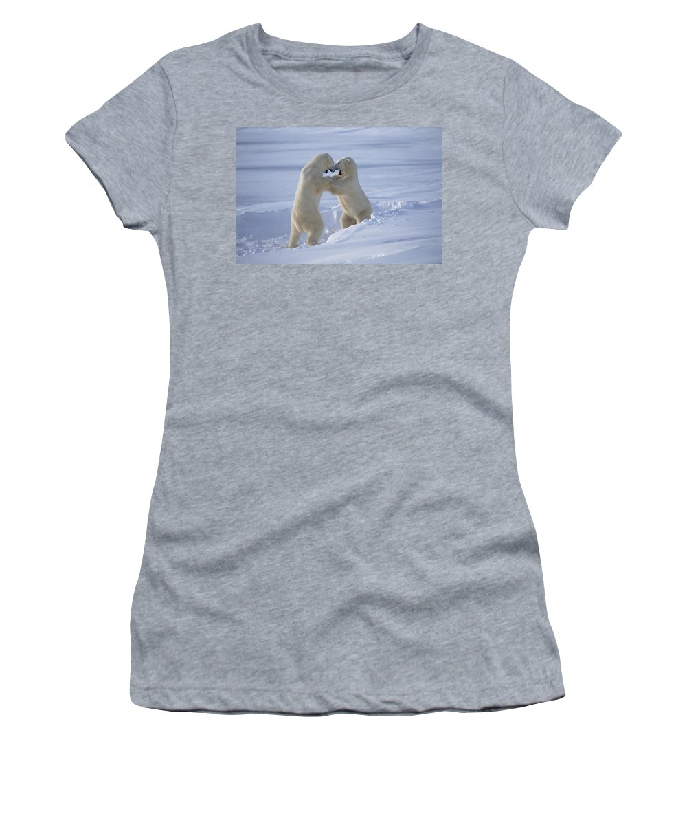 Feb0514 Women's T-Shirt (Athletic Fit) featuring the photograph Polar Bear Males Sparring Churchill by Flip Nicklin