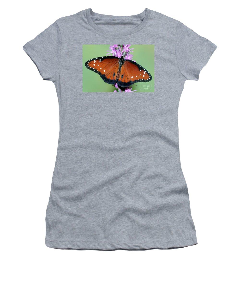 Fauna Women's T-Shirt featuring the photograph Queen Butterfly by Millard H. Sharp